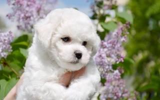 На какие породы собак нет аллергии?