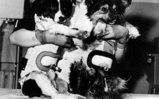 Собака космонавт, жулька и жемчужина