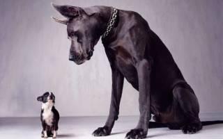 Как научить щенка команде дай лапу?