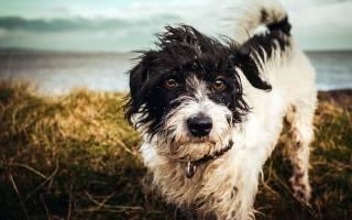 Породы собак которых не надо стричь?