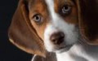 Как проверить щенка по клейму РКФ?