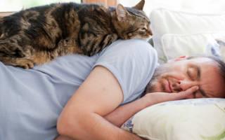 Как сделать кота счастливым?