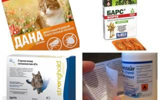 Капли от блох для беременных кошек – суспензия для собак от глистов