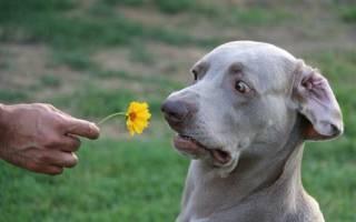 Какой запах не любят собаки?