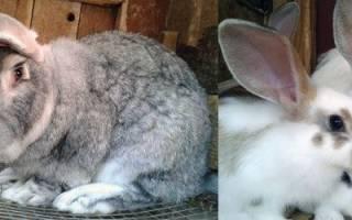 От чего могут умереть кролики