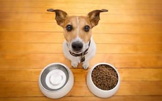 Как выбрать миску для собаки?