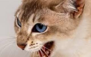 Может ли кошка съесть своего котенка, почему коты едят котят?