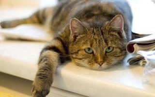Болезни старых кошек симптомы и лечение: старая кошка сильно похудела