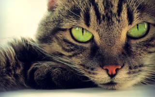Сколько заживает рана после кастрации кота?