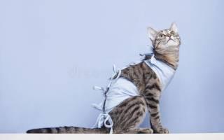 Когда снимать попону с кошки после стерилизации?