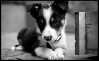 К чему приходит собака в дом примета
