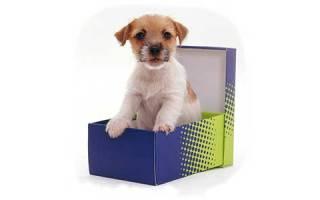 Какие документы нужны при покупке собаки?
