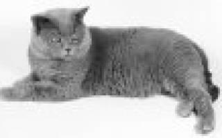Какая порода кошек подходит для детей?