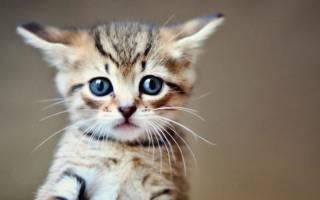 Месячный котенок не ходит в туалет
