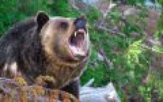 Может ли медведь съесть человека?