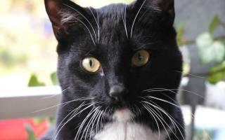Почему у кота ломаются усы что делать?