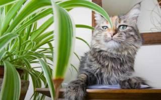 Как отучить кота есть комнатные цветы?