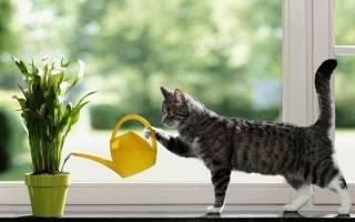 Комнатные растения ядовитые для кошек – цветы кошки