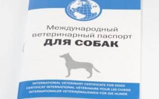 Как сделать ветпаспорт для собаки?