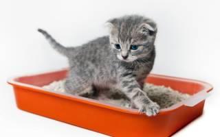 У кота недержание кала что делать: у кошки не держится стул