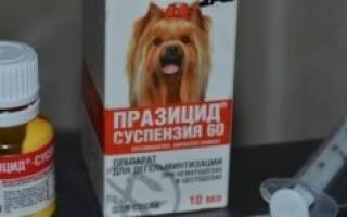 Празицид суспензия плюс отзывы для собак