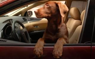 Клетка для перевозки собак в машине – сумка для животных в автомобиль
