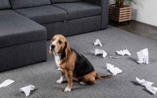 Как отучить собаку грызть обои?