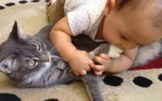 Какие болезни передаются от кошек человеку – кошки переносчики
