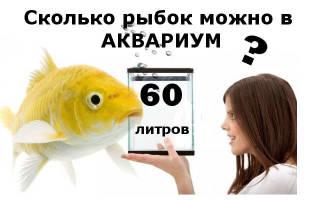Рыбки для аквариума 60 литров