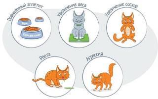 Как выглядят соски у беременной кошки?