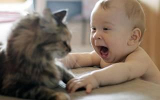 Ребенок боится собак советы психолога