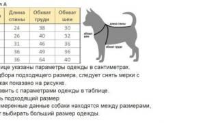 Как уменьшить комбинезон для собаки?