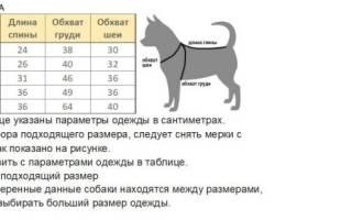 Как сделать выкройку теплого комбинезона для собаки?