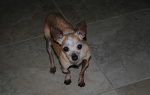 Как лечить рахит у щенков – лечение рахита у собак