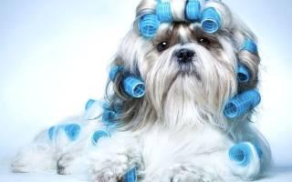 Фото стрижек собак разных пород Ростов — щенок стричь