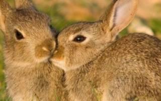 Где живут кролики в природе?