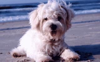 Собака грызет лапы что это за болезнь