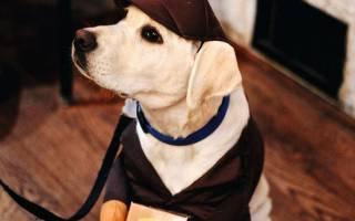 Как из шапки сделать одежду для собаки?