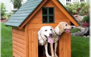 Породы сторожевых собак с фотографиями и названиями – сибирская сторожевая
