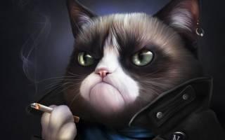 Заболевания от кошек к человеку
