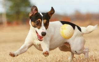 Как можно определить возраст собаки?