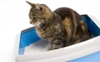 Кошка долго сидит в лотке по маленькому – что делать если кот не может пописать?
