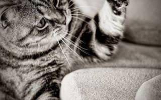 Как отучить кота рвать обои на стенах – кошка царапает диван что делать