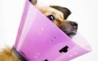 Зачем собакам одевают на шею конус?