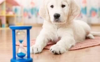 Как приучить собаку оставаться одной дома?