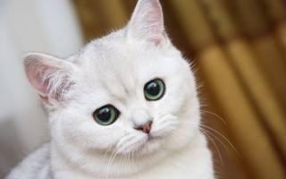 Сколько должна есть кошка в день?