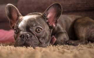 Какая самая популярная порода собак в России?