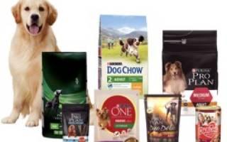 Описание кормов для собак