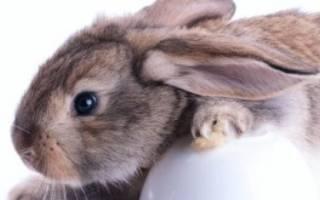 Какое зерно лучше для кроликов