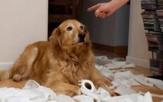 Можно ли бить щенка в целях воспитания: избиение собаки